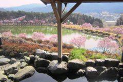 露天風呂 桜