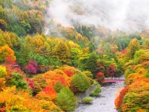 横川峡紅葉